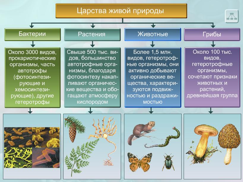 Биология все царства схема
