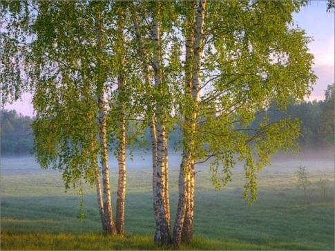 http://www.stihi.ru/pics/2010/09/01/8416.jpg