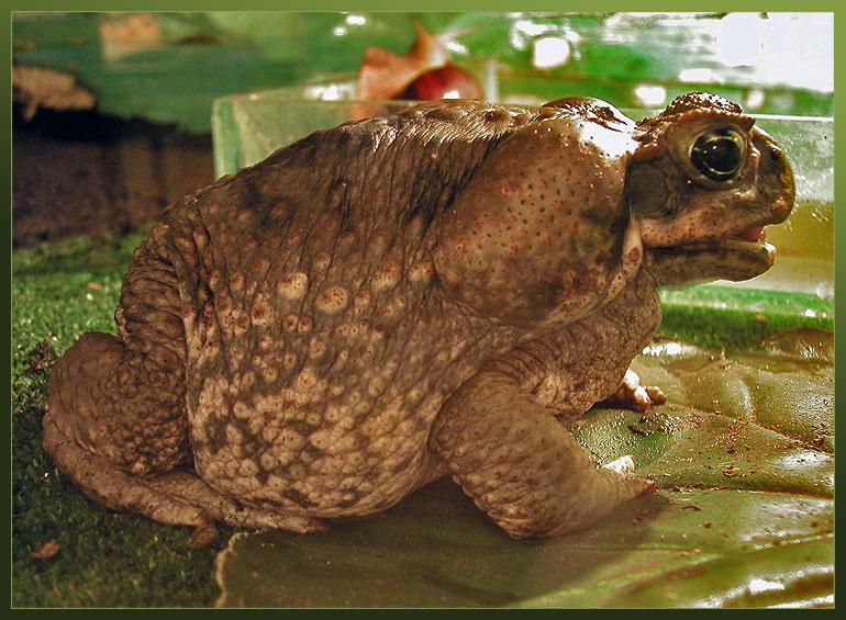 Решенная комплексная контрольная работа 3 класс гармония 2 четверть жаба ага решенная