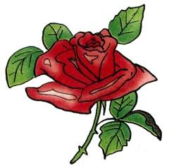 D:\Копилка\Наработки\Звуковка\Звук Р\Карточки\роза.jpg