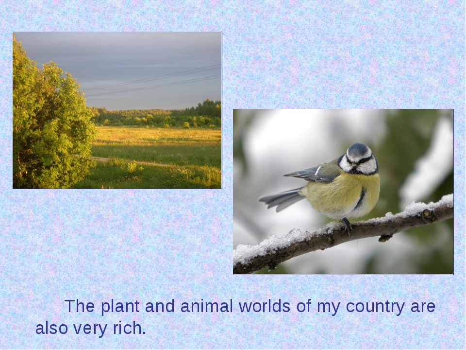 The plant and animal worlds of my country are also very rich.