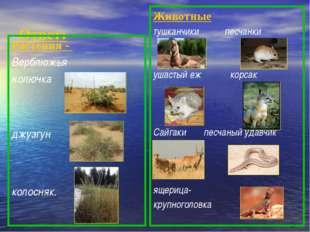 Ответ: Растения - Верблюжья колючка джузгун колосняк. Животные тушканчики пе