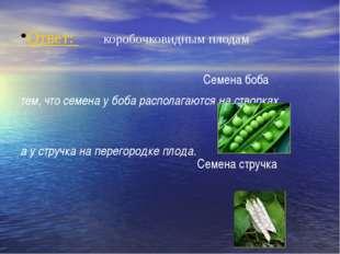 Ответ: коробочковидным плодам тем, что семена у боба располагаются на створк