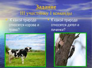 Задание III участнику I команды К какой природе относятся дятел и личинки? К