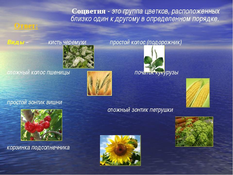 Ответ: Соцветия - это группа цветков, расположенных близко один к другому в...