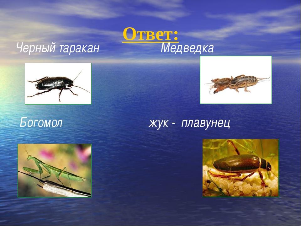 Ответ: Черный таракан Медведка Богомол жук - плавунец