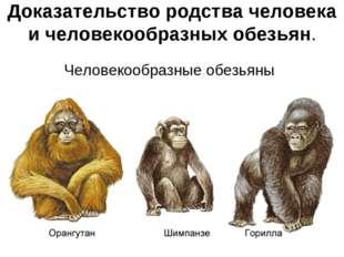 Доказательство родства человека и человекообразных обезьян. Человекообразные