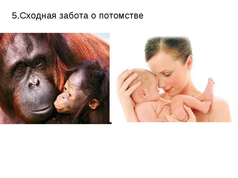 5.Сходная забота о потомстве