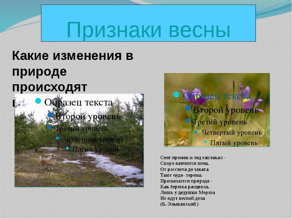 Признаки весны Какие изменения в природе происходят весной? Снег промок и лед...