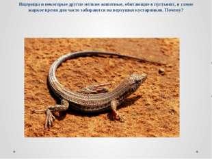 Ящерицы и некоторые другие мелкие животные, обитающие в пустынях, в самое жар