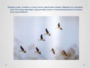 Каждую осень, готовясь к отлету на юг, перелетные птицы собираются в огромные