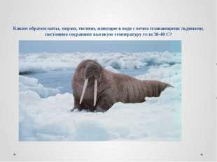 Каким образом киты, моржи, тюлени, живущие в воде с вечно плавающими льдинами