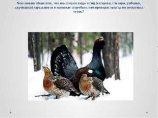 Чем можно объяснить, что некоторые виды птиц (тетерева, глухари, рябчики, кур