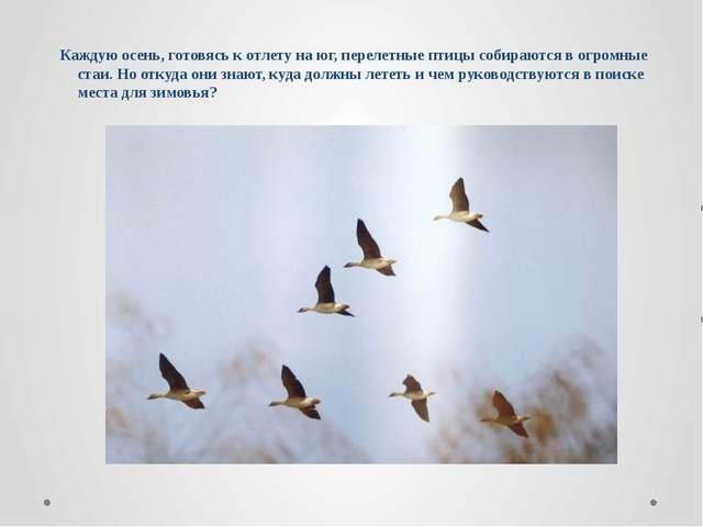 Каждую осень, готовясь к отлету на юг, перелетные птицы собираются в огромные...