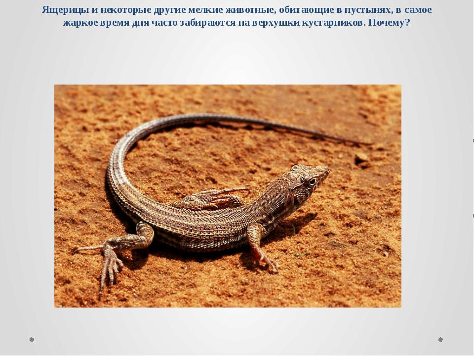 Ящерицы и некоторые другие мелкие животные, обитающие в пустынях, в самое жар...