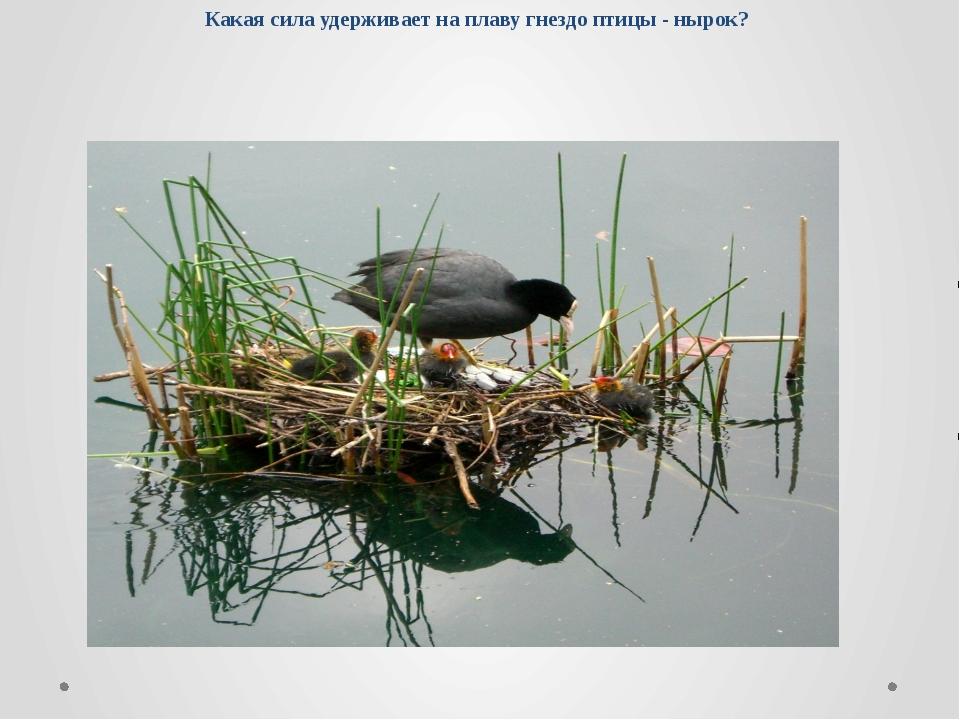 Какая сила удерживает на плаву гнездо птицы - нырок?