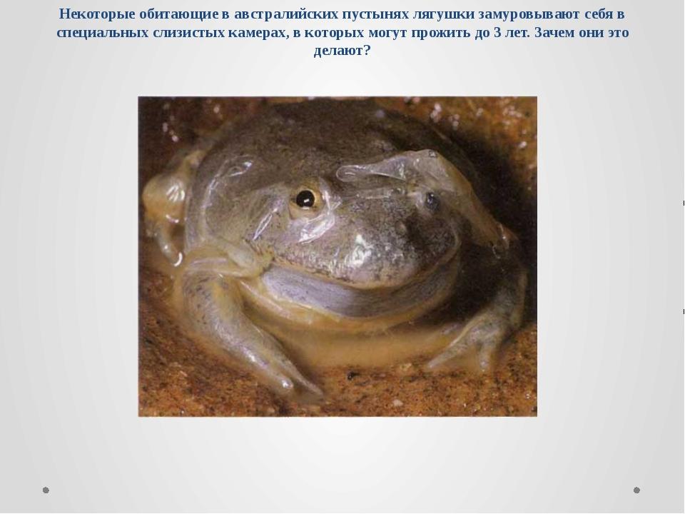 Некоторые обитающие в австралийских пустынях лягушки замуровывают себя в спец...