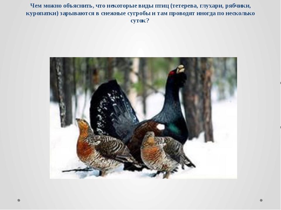 Чем можно объяснить, что некоторые виды птиц (тетерева, глухари, рябчики, кур...