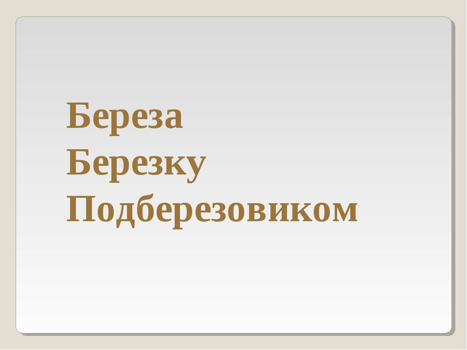 Береза Березку Подберезовиком