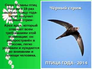 Союз Охраны птиц России в 19-раз выбрал птицу года-титул получил чёрный стриж