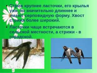 Стриж крупнее ласточки, его крылья уже, но значительно длиннее и имеют серпов