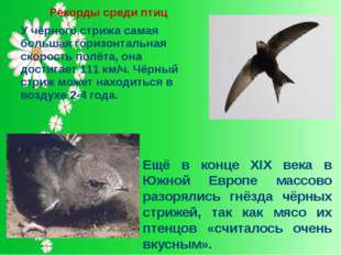 Рекорды среди птиц У чёрного стрижа самая большая горизонтальная скорость пол