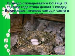 В гнездо откладывается 2-3 яйца. В течение года птица делает 1 кладку. Высижи