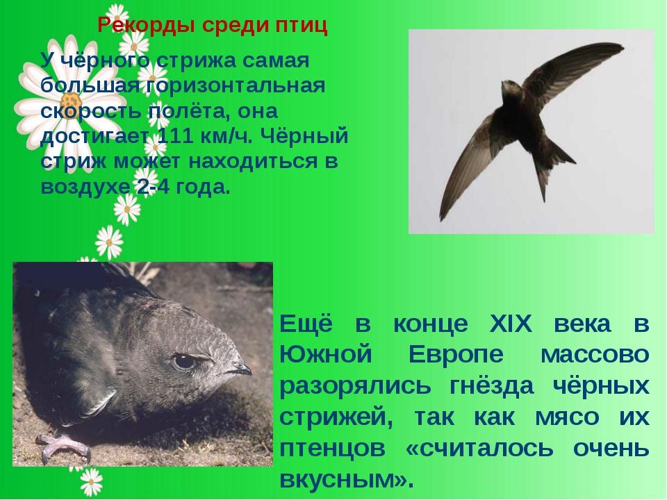 Рекорды среди птиц У чёрного стрижа самая большая горизонтальная скорость пол...