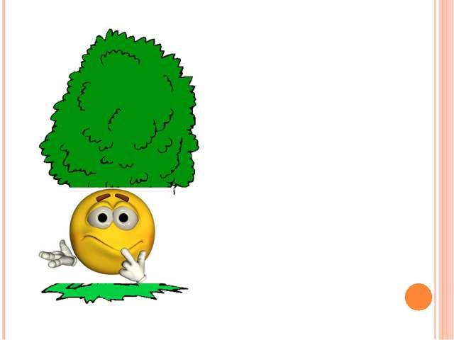 Какое дерево является символом нашей Родины?