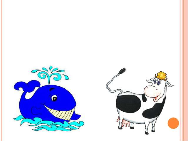 Чье молоко самое жирное – у кита или у коровы?