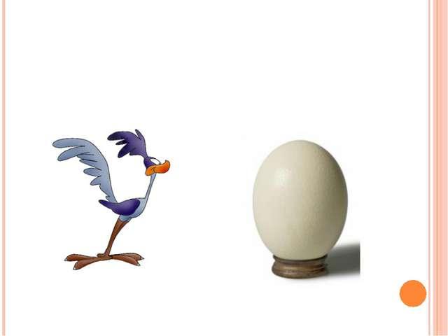 Верите ли вы, что яйцо страуса самое крупное?