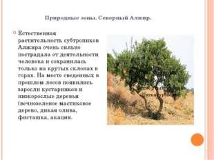 Природные зоны. Северный Алжир. Естественная растительность субтропиков Алжир