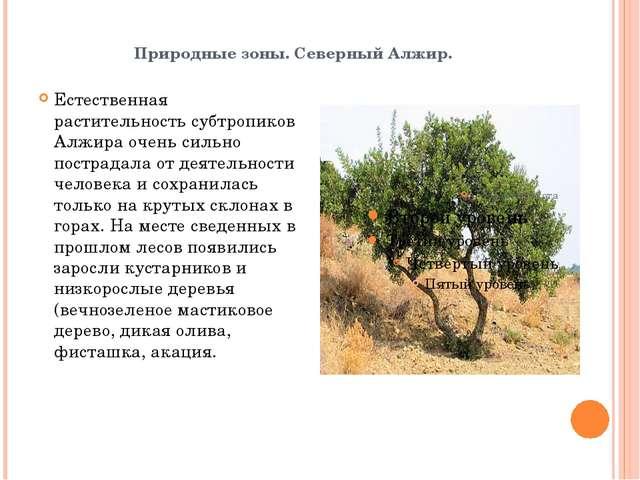 Природные зоны. Северный Алжир. Естественная растительность субтропиков Алжир...