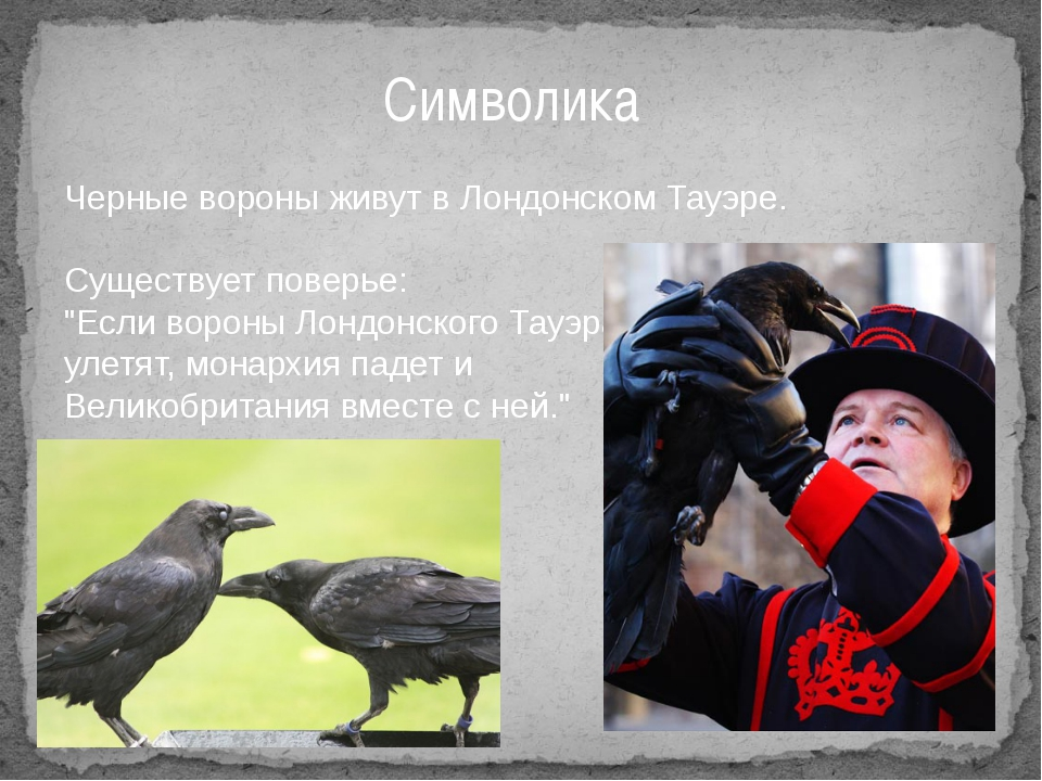 """Символика Черные вороны живут в Лондонском Тауэре. Существует поверье: """"Если..."""