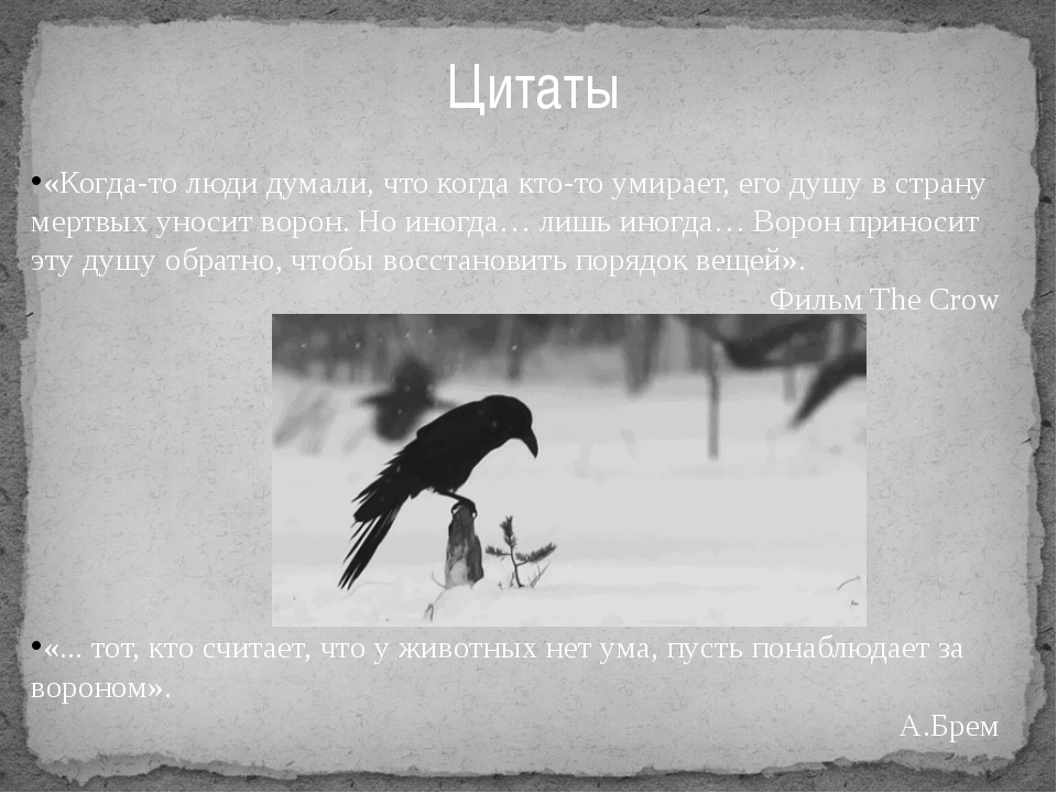 Цитаты «Когда-то люди думали, что когда кто-то умирает, его душу в страну мер...
