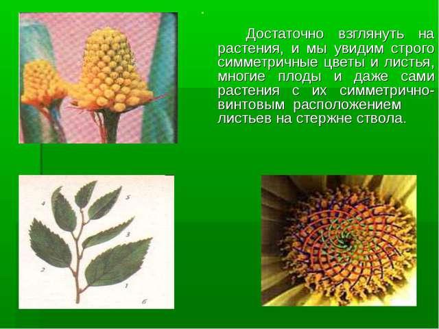 Достаточно взглянуть на растения, и мы увидим строго симметричные цветы и ли...