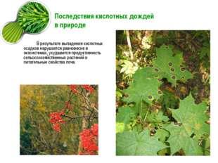 Последствия кислотных дождей в природе В результате выпадения кислотных осадк