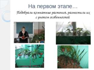 На первом этапе… Подобрали комнатные растения, разместили их с учетом особенн