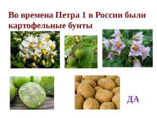 Во времена Петра 1 в России были картофельные бунты ДА