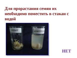 Для прорастания семян их необходимо поместить в стакан с водой НЕТ