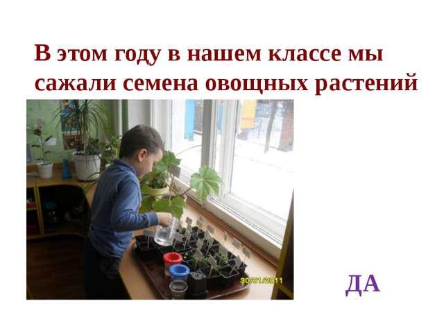 В этом году в нашем классе мы сажали семена овощных растений ДА