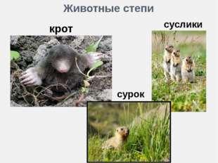 Животные степи крот суслики сурок