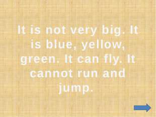 It is not very big. It is blue, yellow, green. It can fly. It cannot run and