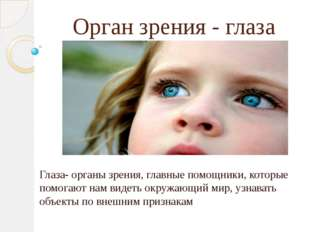 Орган зрения - глаза Глаза- органы зрения, главные помощники, которые помогаю