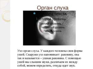 Орган слуха Ухо-орган слуха. У каждого человека своя форма ушей. Снаружи ухо