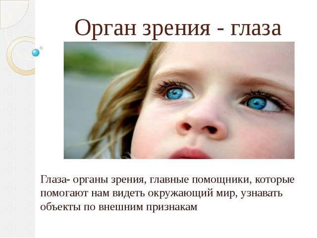 Орган зрения - глаза Глаза- органы зрения, главные помощники, которые помогаю...