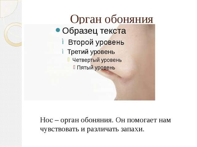 Орган обоняния Нос – орган обоняния. Он помогает нам чувствовать и различать...