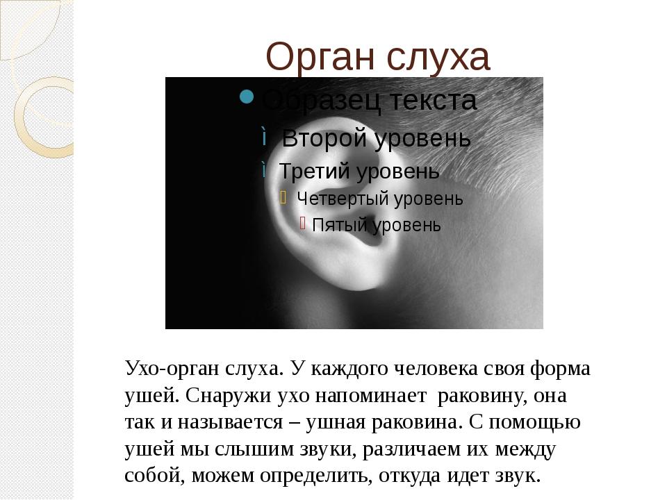Орган слуха Ухо-орган слуха. У каждого человека своя форма ушей. Снаружи ухо...