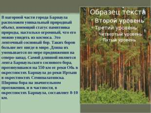 Ленточный бор – бесценный дар для края. В нагорной части города Барнаула расп