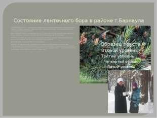 Состояние ленточного бора в районе г.Барнаула СУХОВЕРШИННОСТЬ - характерное п
